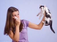 Alergia na sierść zwierząt: na czym polega, jakie są jej objawy i jak ją leczyć?