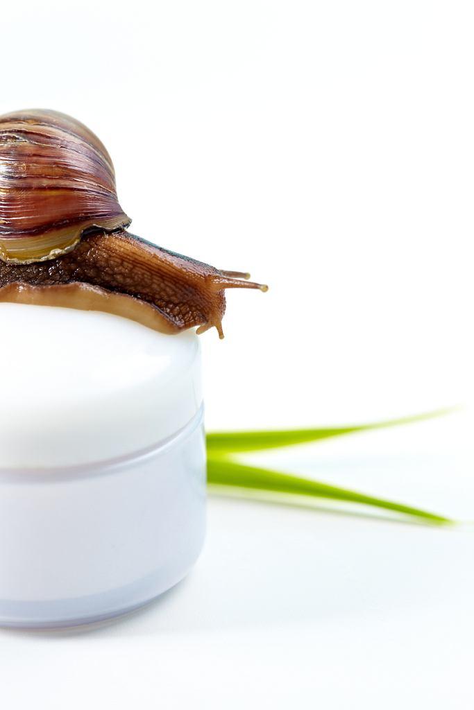 Co zawiera krem ze śluzem ślimaka? Właściwości i działanie śluzu ślimaka